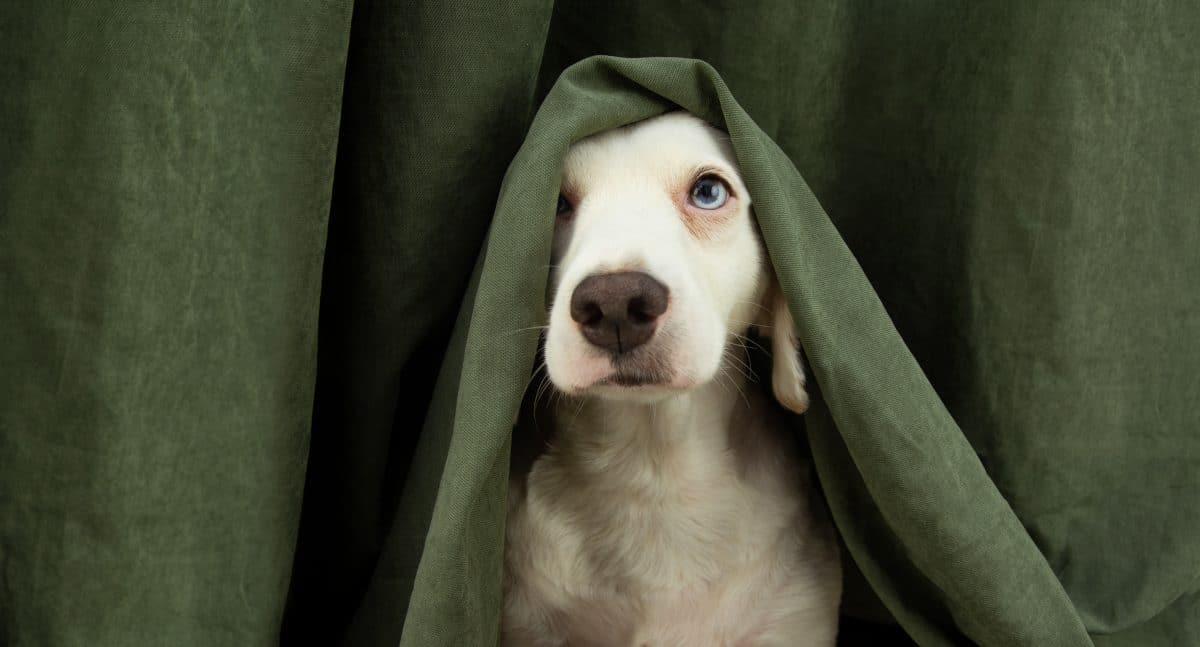 Hunde und Silvester: So geht es deinem Vierbeiner gut