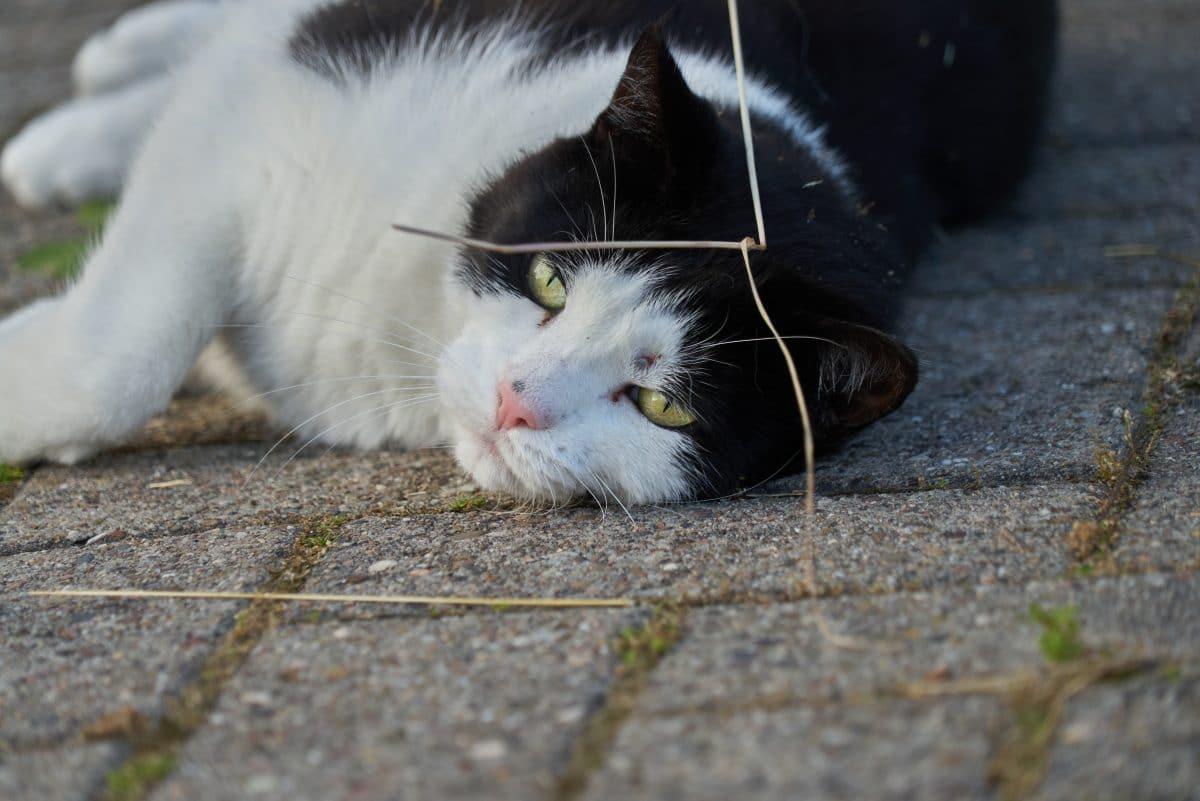 Gerichtsurteil: Luftgewehr-Schüsse auf Katzen sind keine Tierquälerei