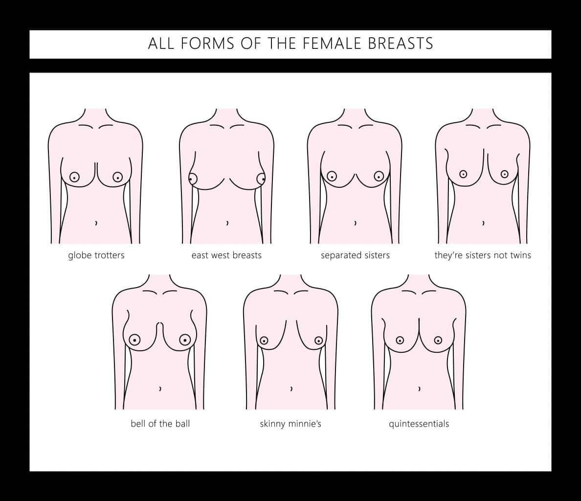 Bilder brustformen Category:Female human