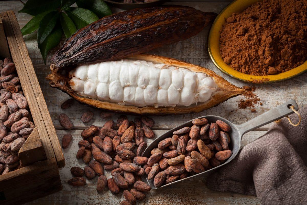 Weltweiter Kakaobestand ist in Gefahr: Klimawandel bedroht Rohstoff
