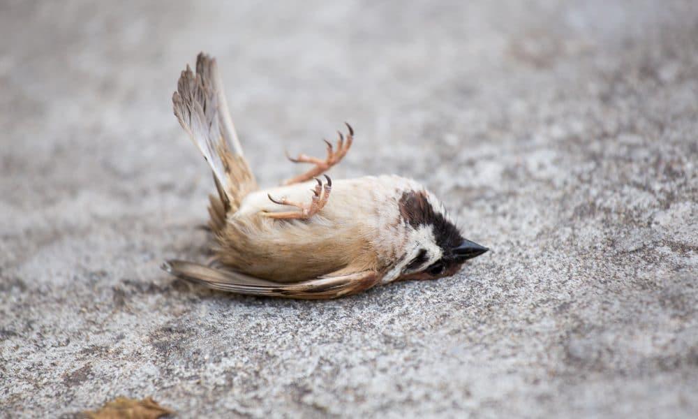 Rom Massensterben Vögel