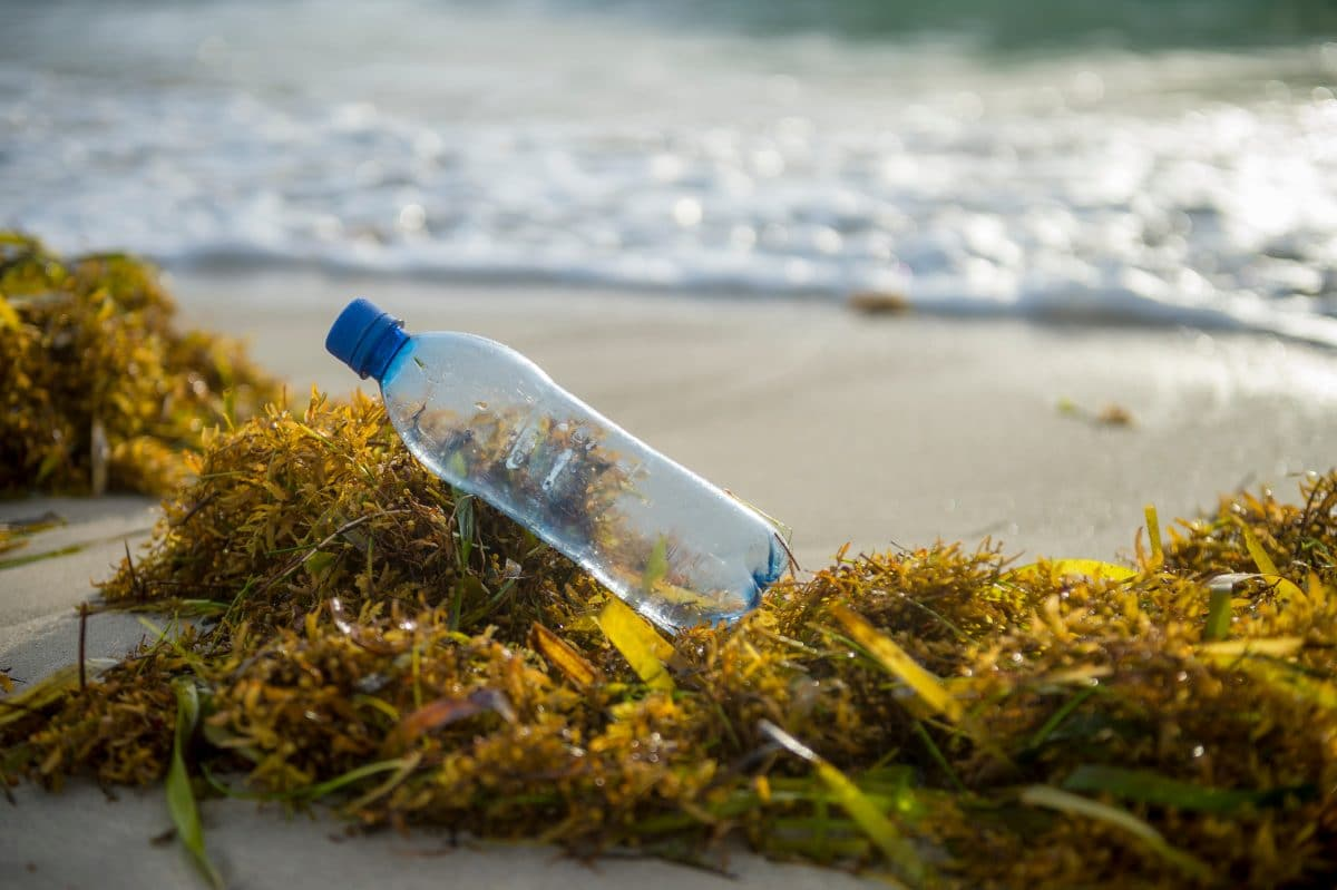 So hilft Seegras dabei, das Meer von Plastikmüll zu befreien