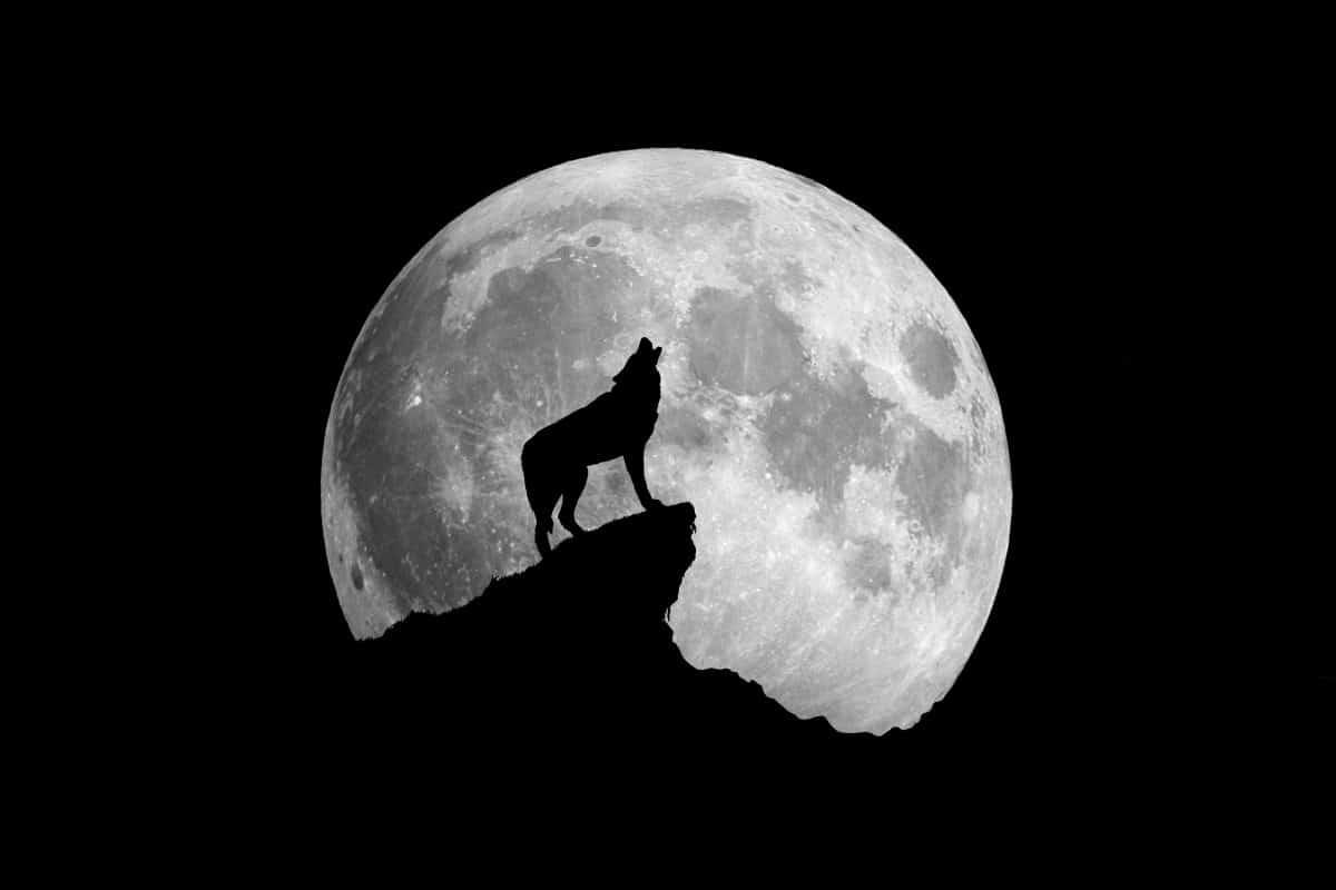 Der erste Vollmond im Januar 2021 ist ein Wolfsmond