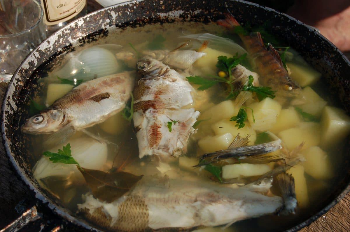Fischfond – Grundrezept