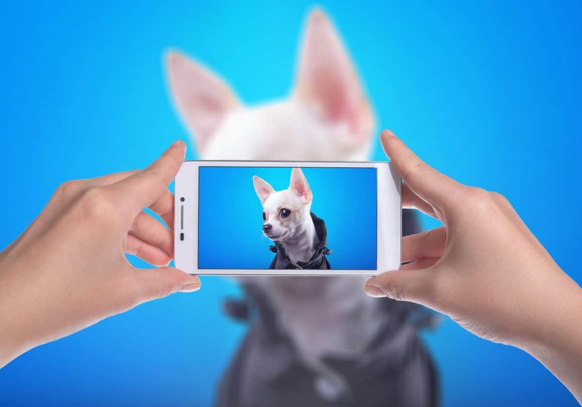 Petfluencer: Das sind die stylischten Instagram Hunde