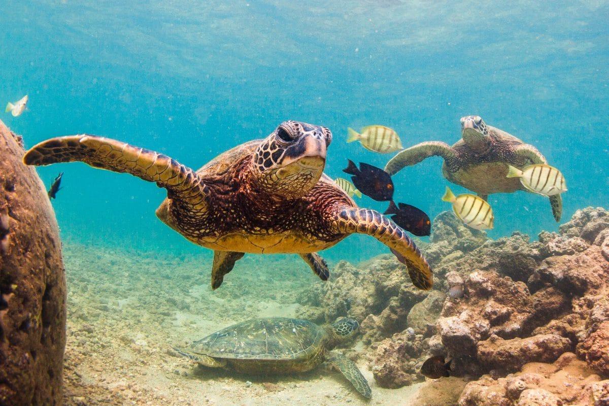 4.000 Schildkröten zum Schutz vor Kälte im Kongresszentrum in Texas untergebracht