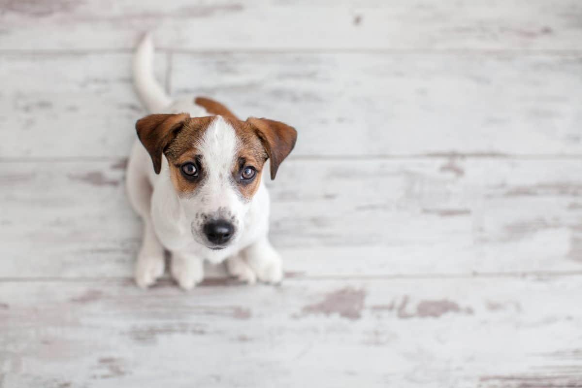 Influencerin quälte Hund vor laufender Kamera, um mehr Follower zu bekommen