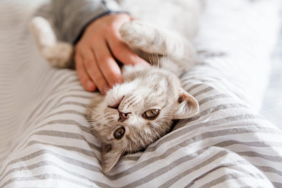 Erste Katze in Österreich von Besitzer mit Coronavirus infiziert