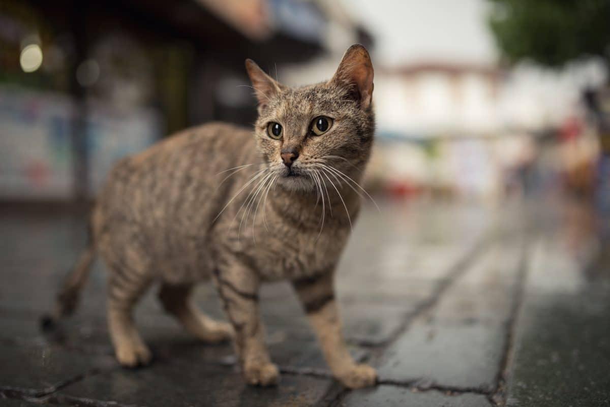 Brand im Kraftwerk: Katze legt gesamte Insel lahm