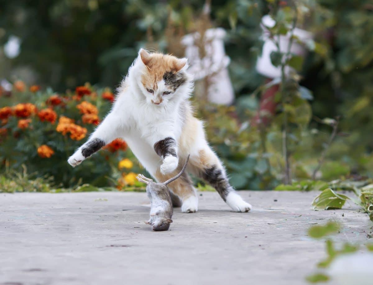 So hältst du deine Katze vom Töten ab