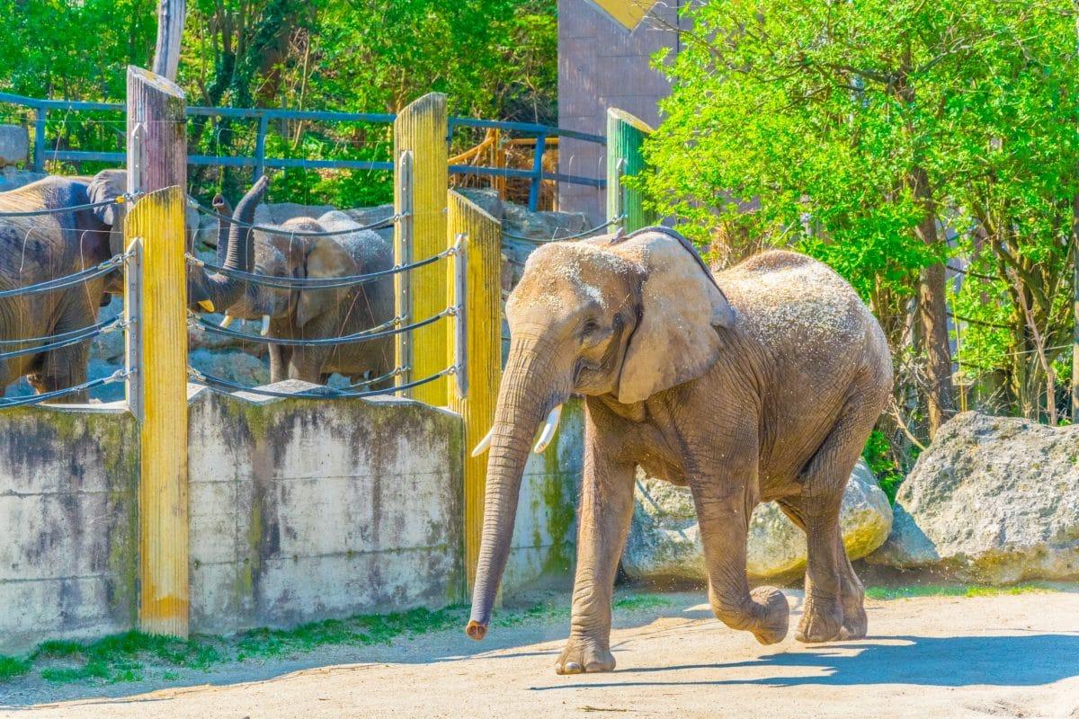 Tierpfleger in spanischem Zoo von Elefanten getötet