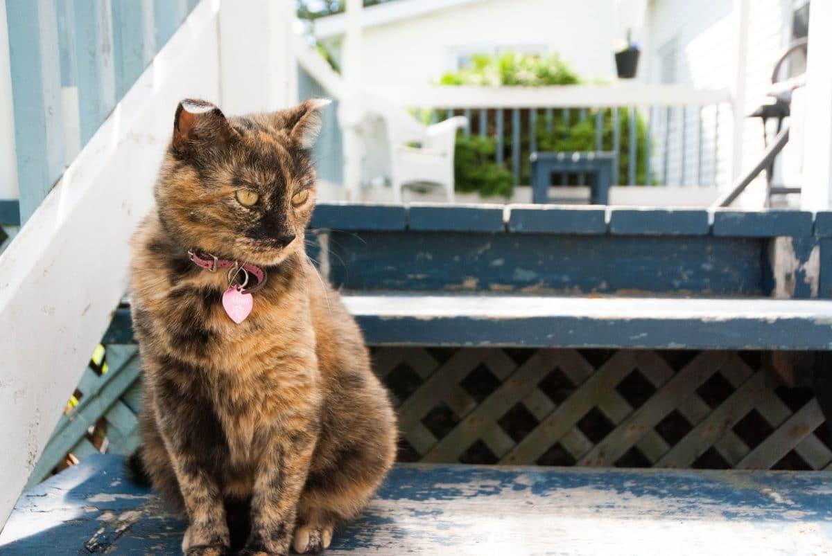 Vermisste Katze Polly kommt nach 13 Jahren zurück nach Hause