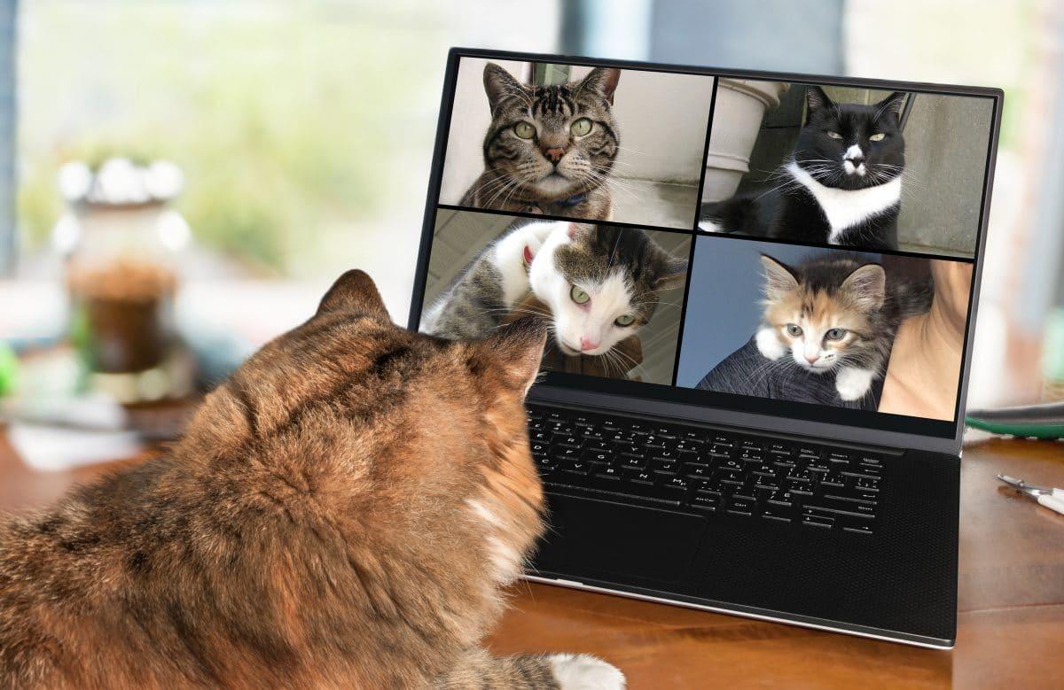 """""""Ich bin keine Katze"""": Anwalt aktiviert unabsichtlich Katzenfilter während Zoom-Gerichtsverhandlung"""