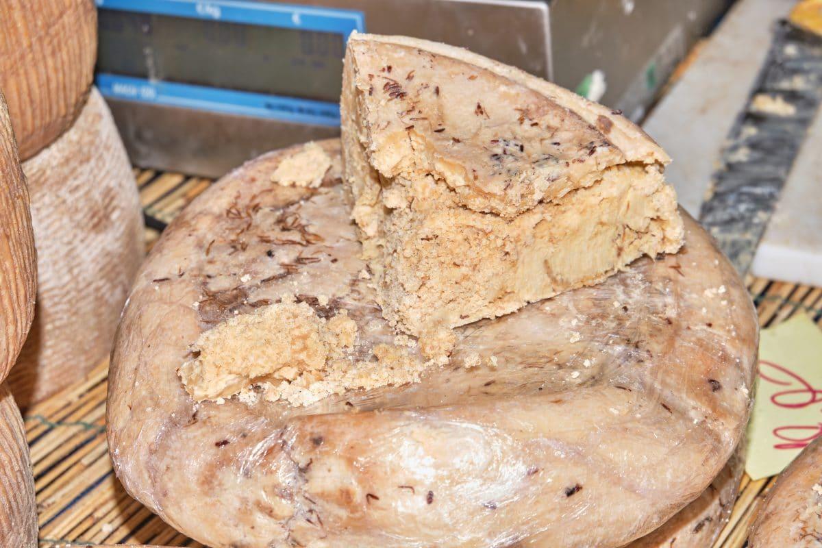 Casu Marzu: Das ist der gefährlichste und ekligste Käse der Welt