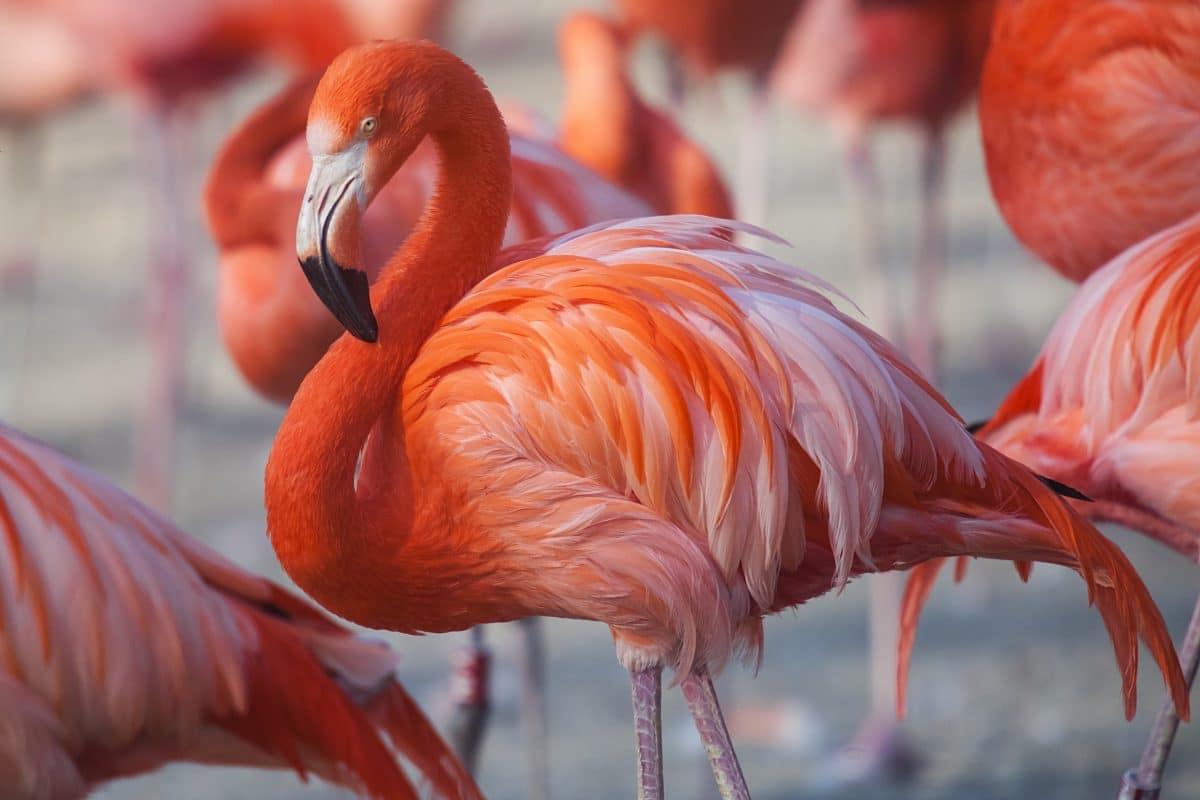 Flamingo wurde aus deutschem Zoo gestohlen