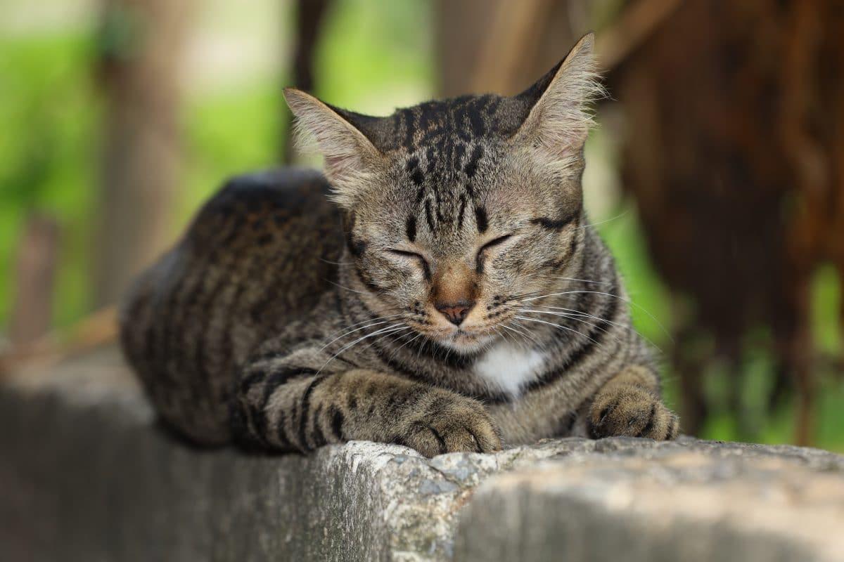 Katze ist 14 Jahre nach ihrem Verschwinden wieder bei ihrer Besitzerin