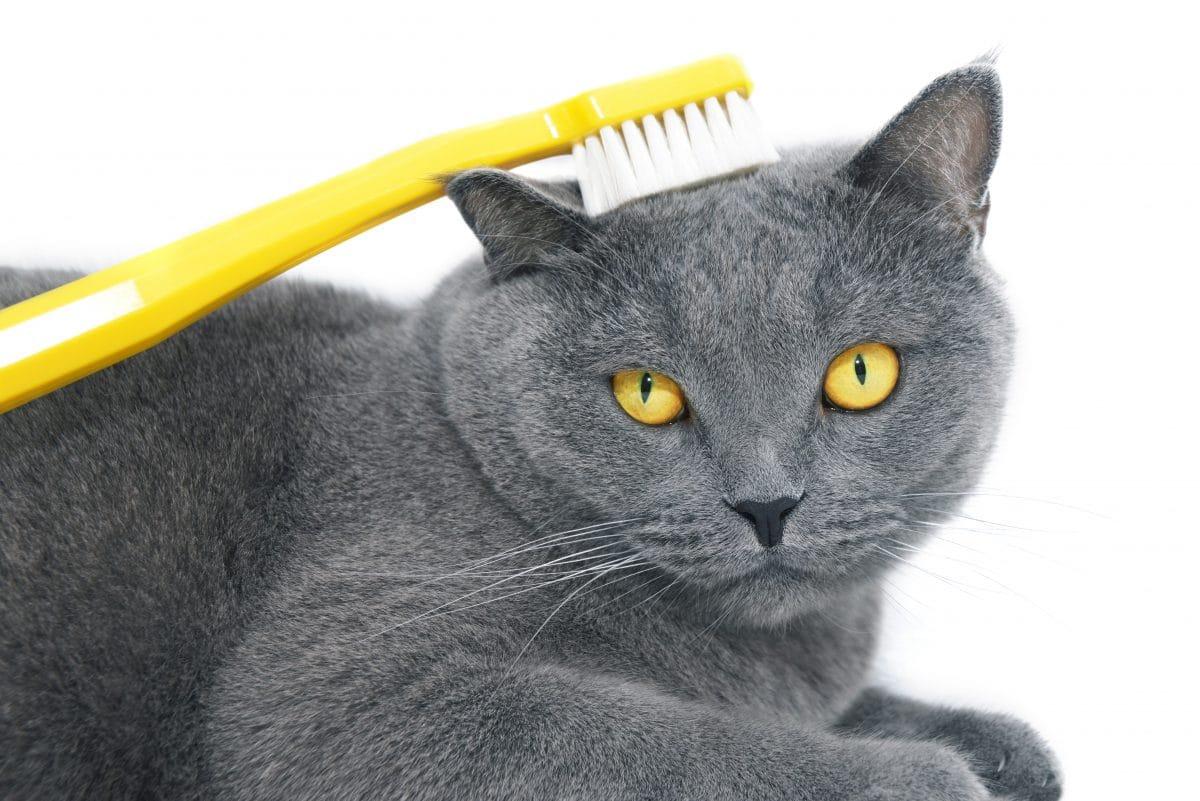 Deshalb lieben es Katzen, mit nassen Zahnbürsten gekämmt zu werden
