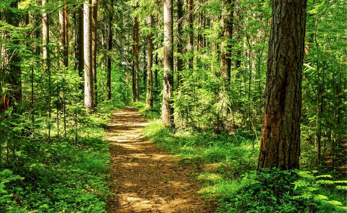 Mann lebte unter Ästen im Wald