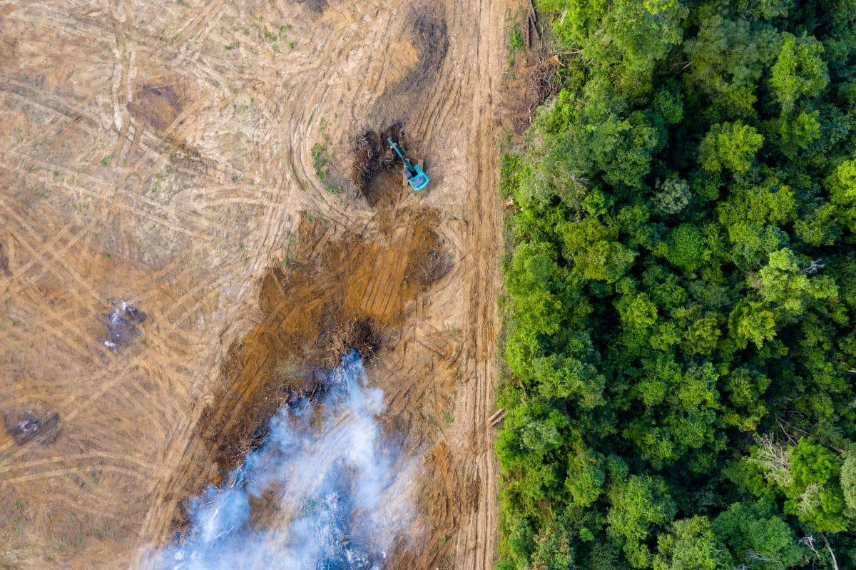 Bereits zwei Drittel der Regenwälder zerstört oder ausgedünnt