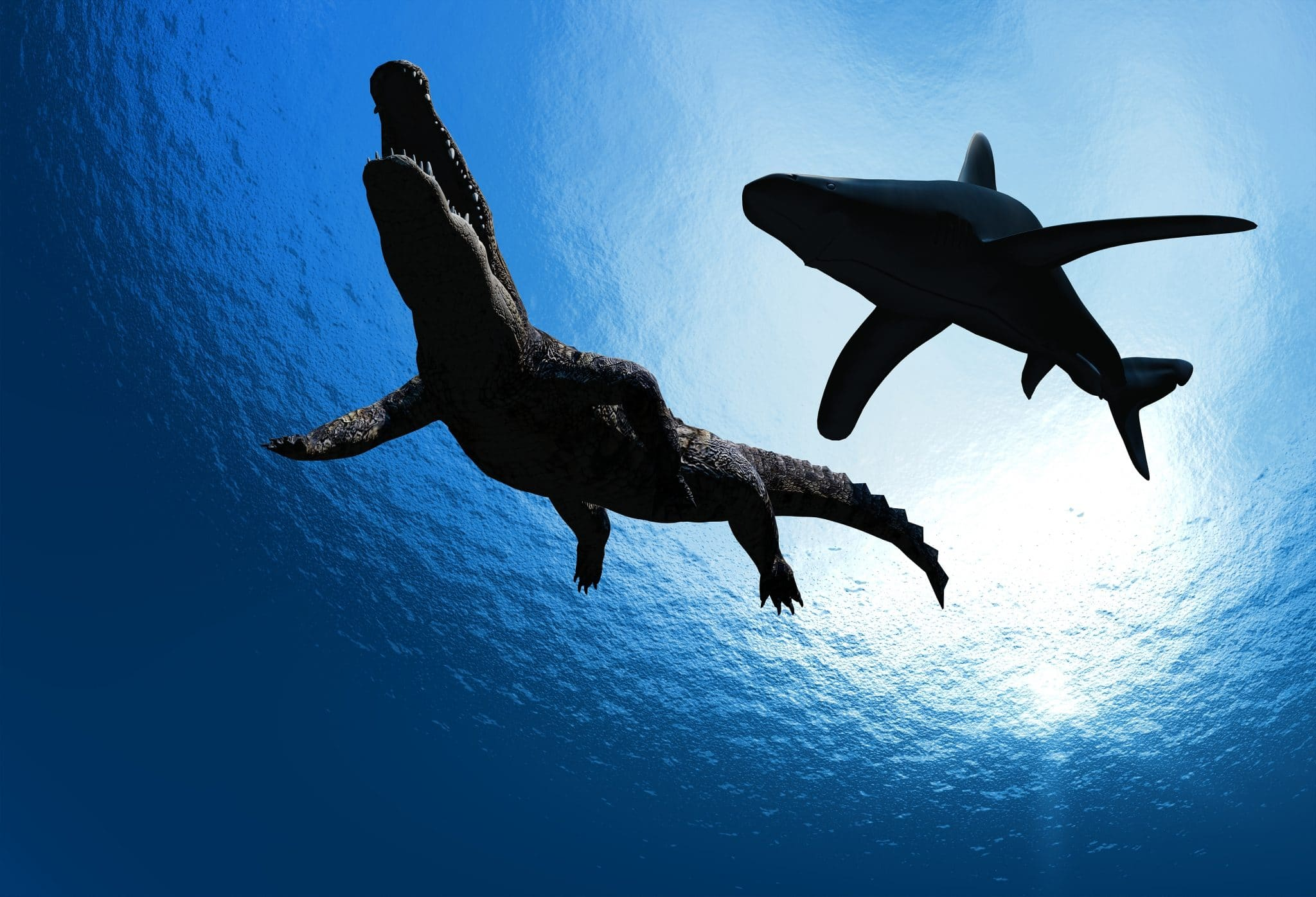 Spektakul-res-Video-Hai-jagt-Krokodil-in-Australien