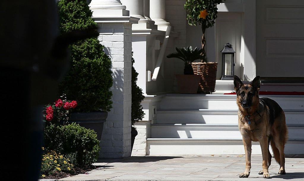 """Hund von Präsident Joe Biden bekommt """"First Dog""""-Unterricht"""