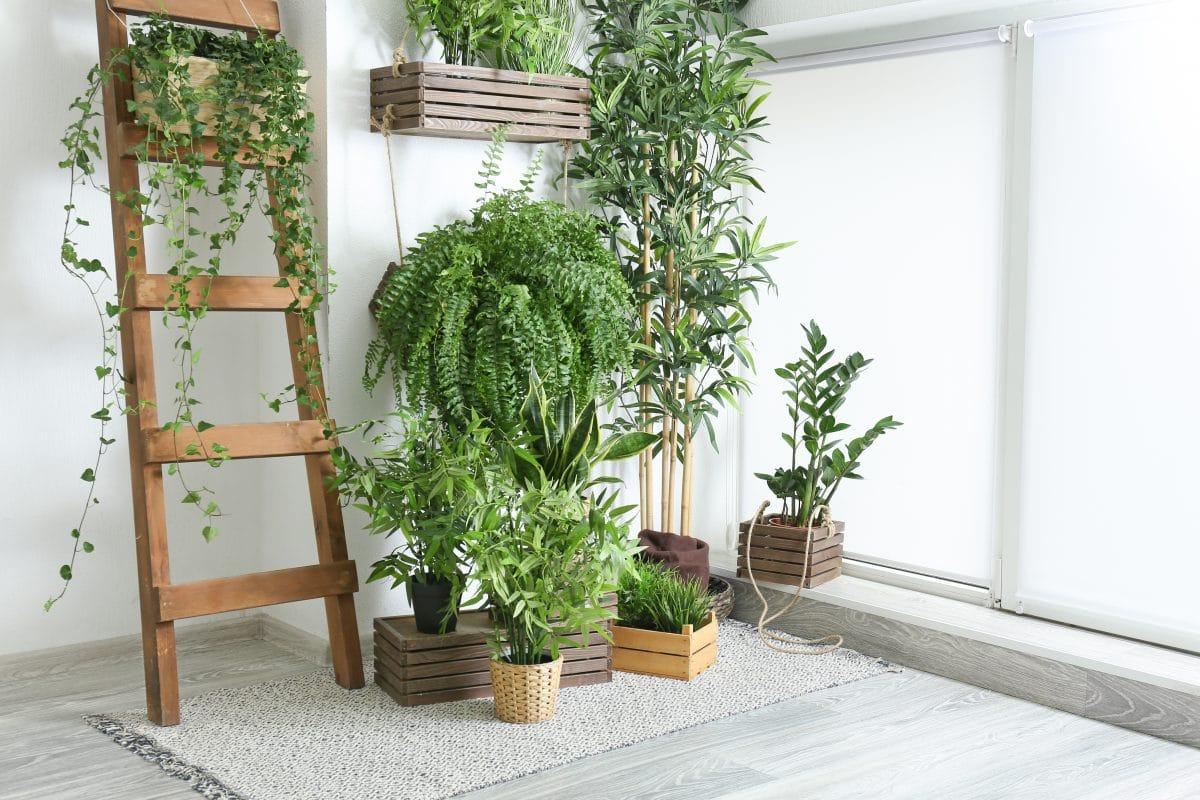 Luftpflanzen sind DER Deko-Trend im Frühjahr 2021