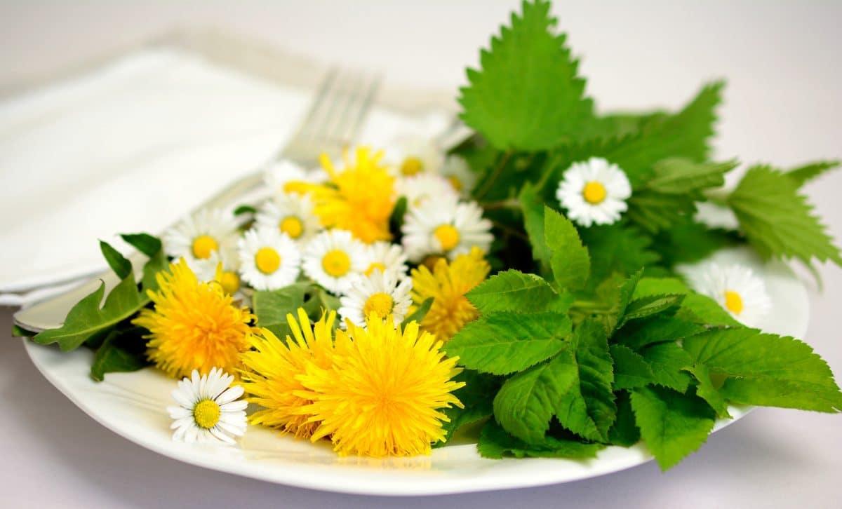Wildkräutersalat mit gerösteten Pilzen Rezept