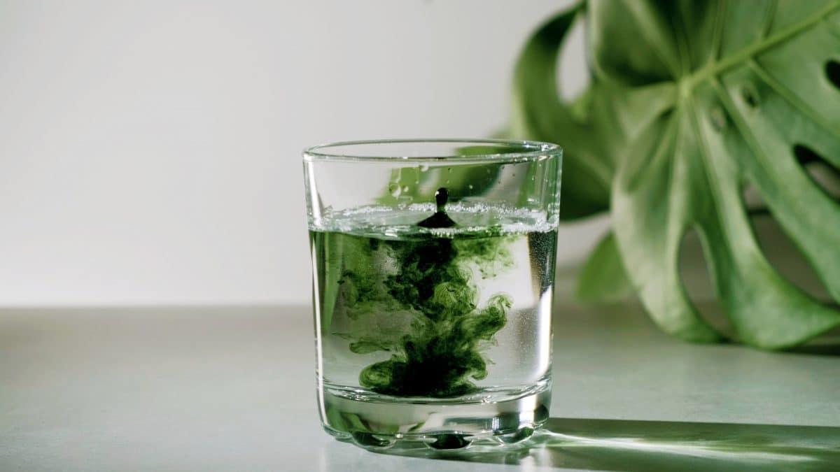 TikTok-Trend: Darum sollten wir Wasser mit Chlorophyll trinken