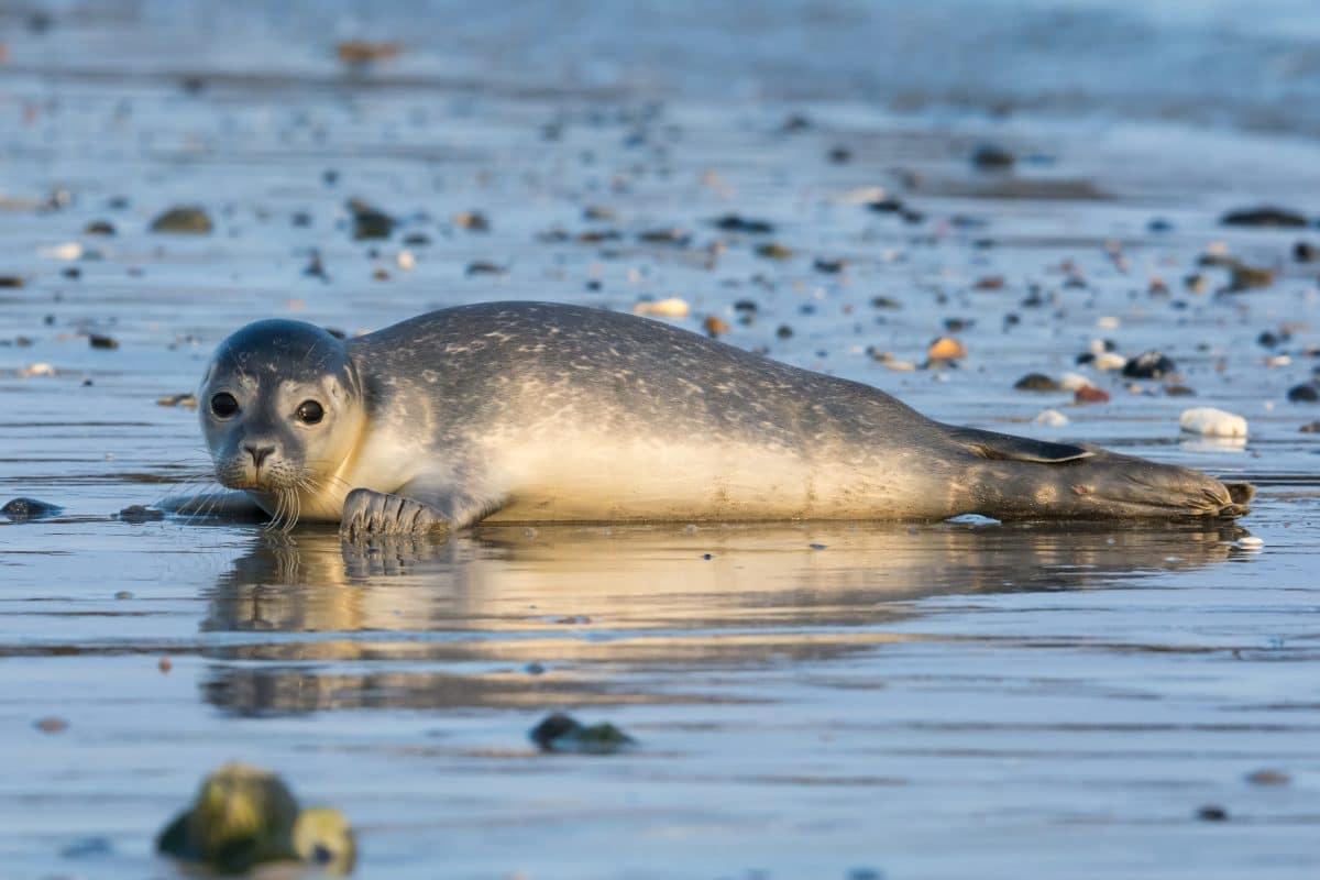 Rund 170 tote Robben an Ufer in Russland gespült