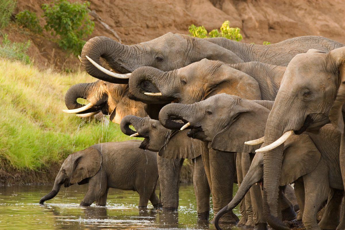 18 Elefanten in Indien bei Gewitter durch Blitzschlag getötet
