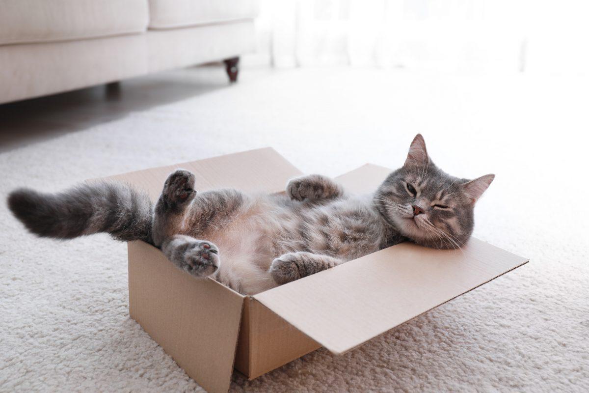 Katzen lieben Rechtecke und erkennen optische Illusionen