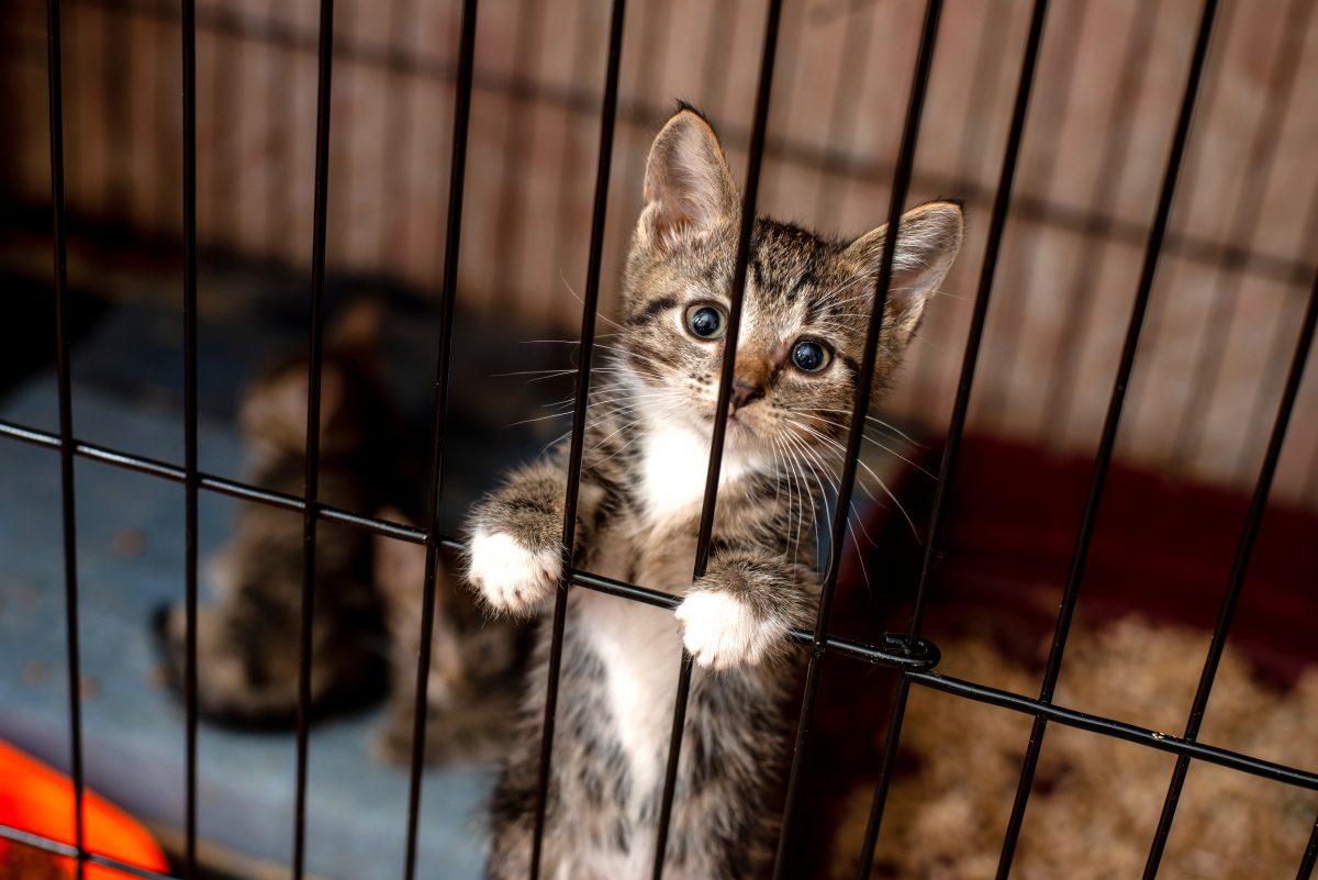 Kurierdienst in China verschickte lebende Katzen und Hunde
