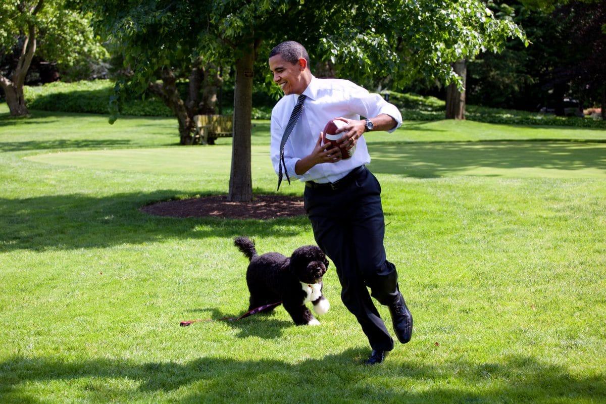 Obamas Familienhund Bo ist tot