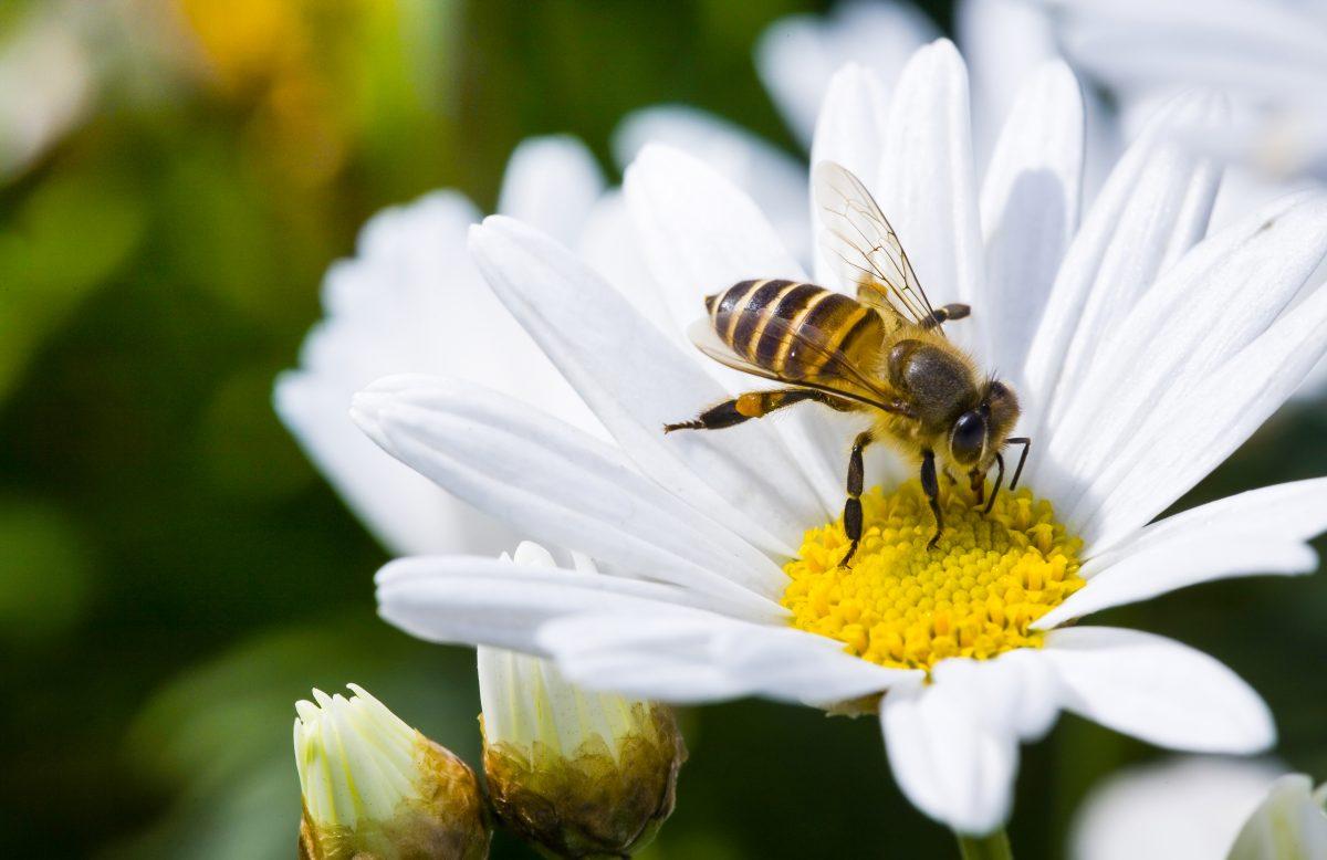 Tag der Biene: 5 Tipps, um die fleißigen Insekten zu schützen