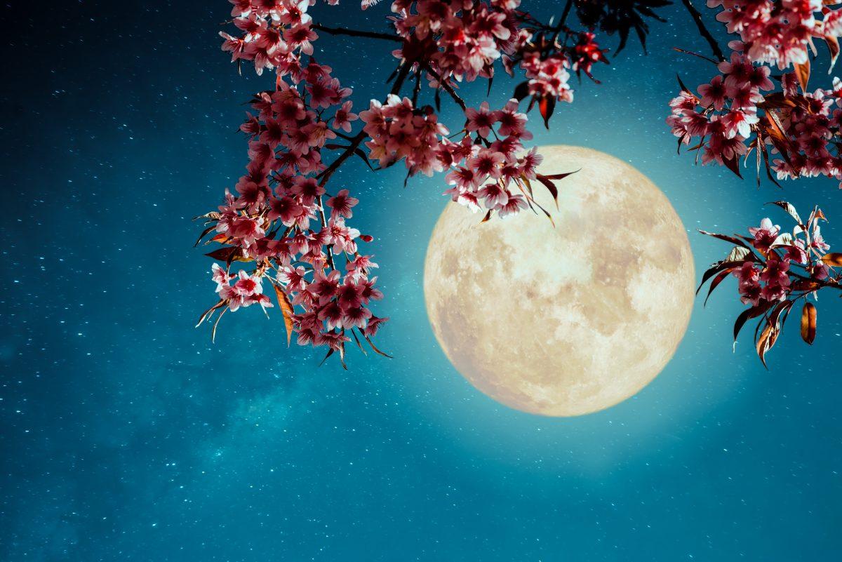 Vollmond am 26. Mai: Diese Kraft hat der Flower Moon