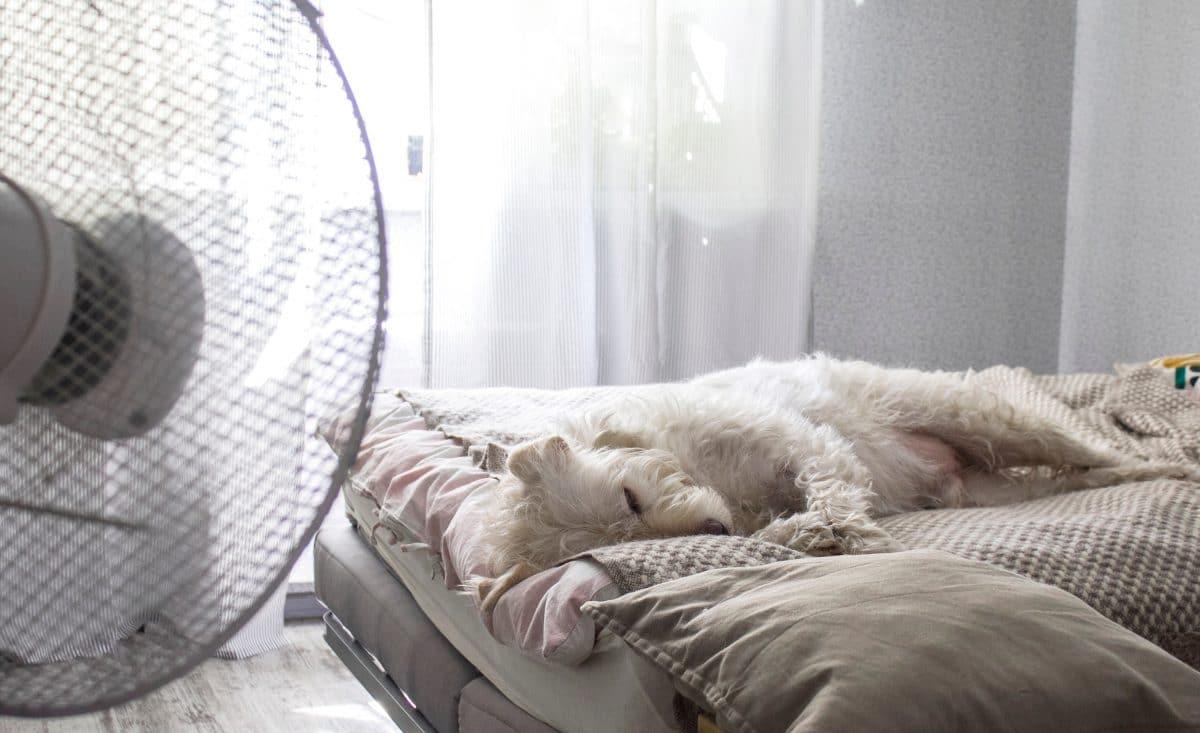 Besser schlafen bei Hitze: Mit diesen 5 Tipps gelingt's