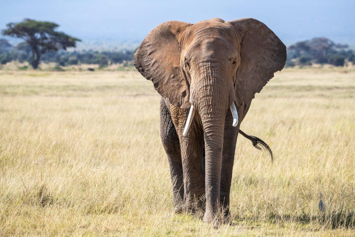 Elefant reißt Loch in Küchenwand und bedient sich: Video geht viral