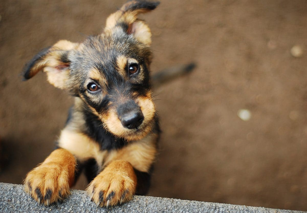 Tierquälerei: Frau in Niederösterreich mussten zehn Hunde abgenommen werden