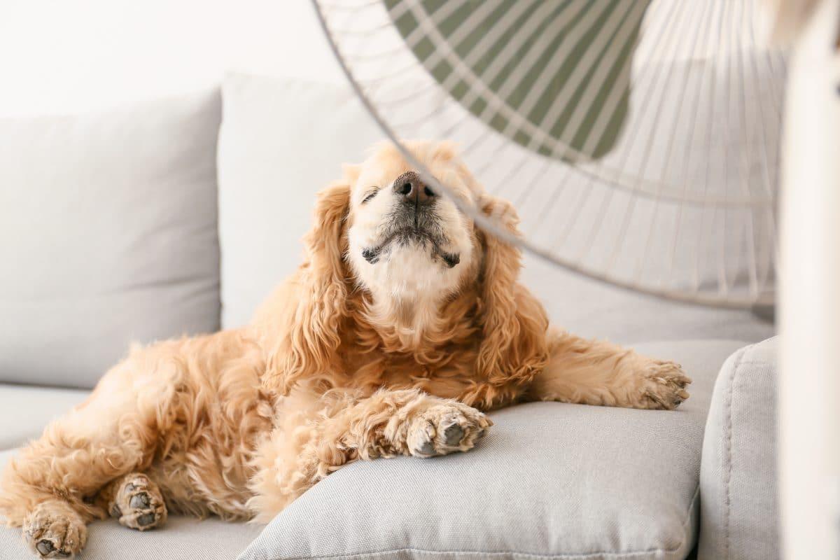"Hitzewelle: ""Cooling Center"" in Wien hat wieder geöffnet"