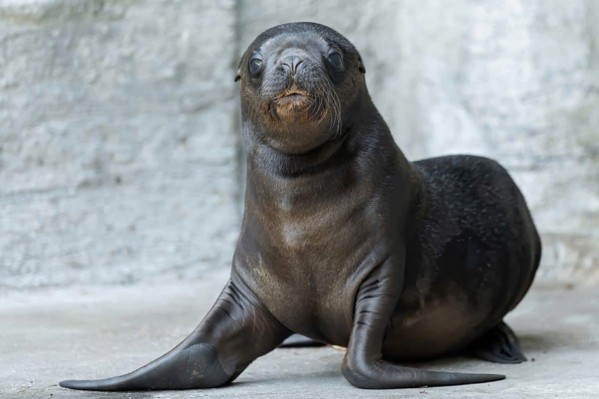Robben-Baby im Tiergarten Schönbrunn geboren