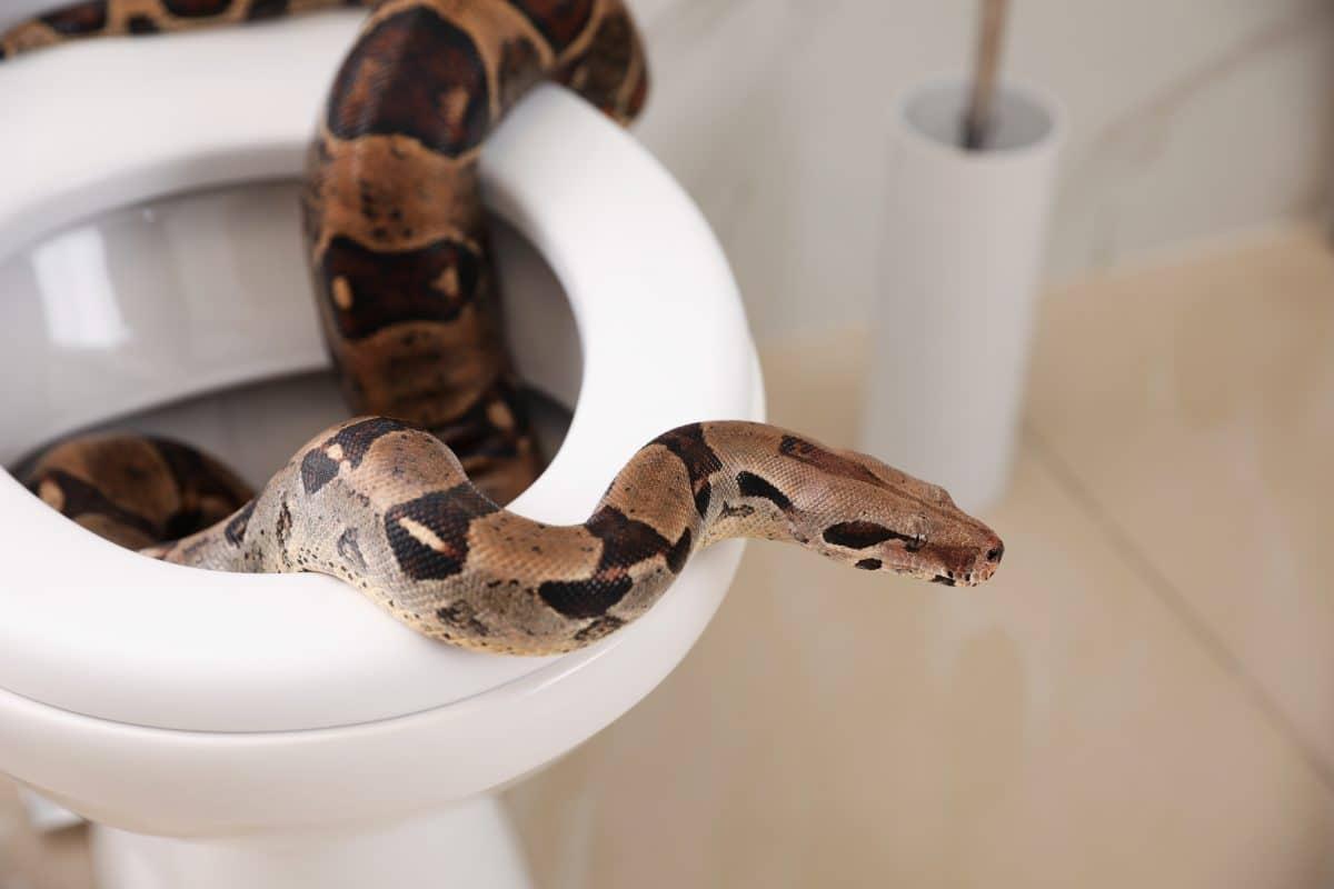 Schon wieder Schlange in WC aufgetaucht, dieses Mal in Wien