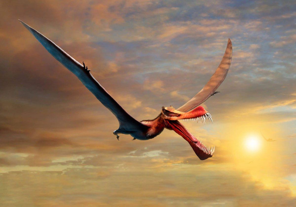 """Drachenartiger Flugsaurier mit """"Speer-Maul"""" entdeckt"""
