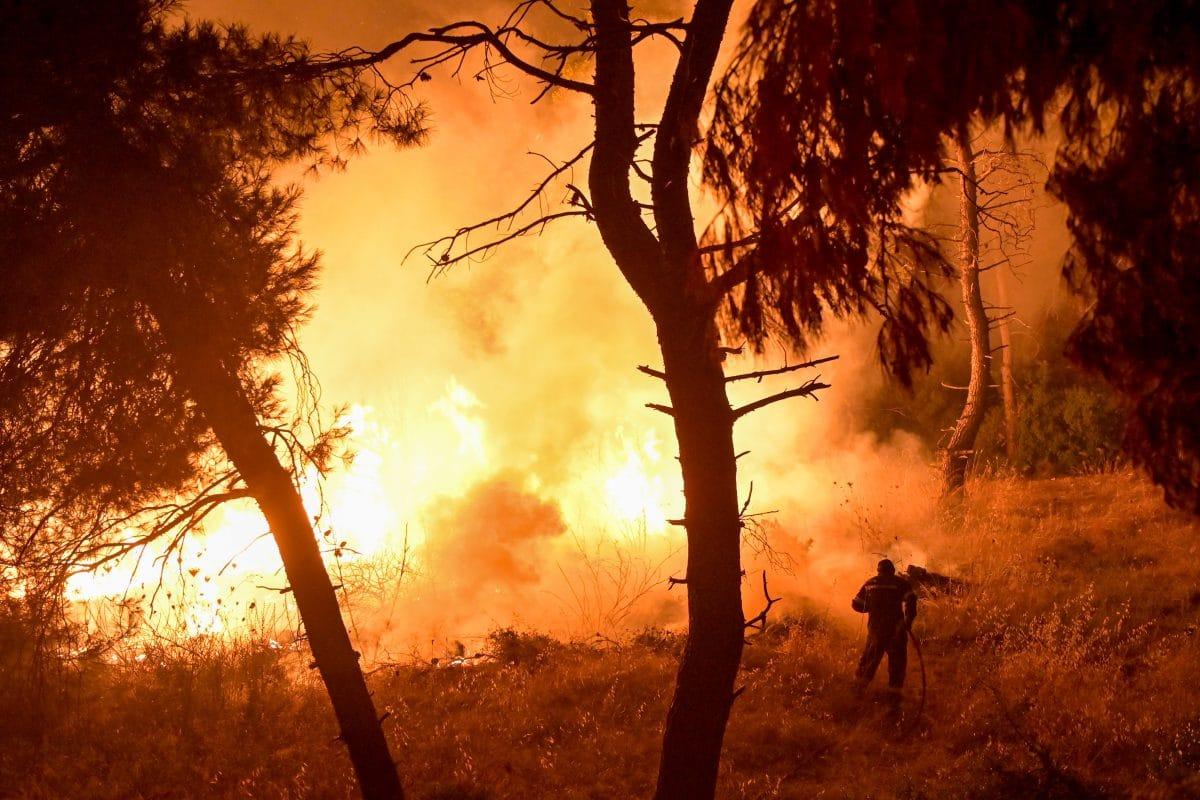 Weitere Waldbrände: Algerien meldet mehr als 40 Tote