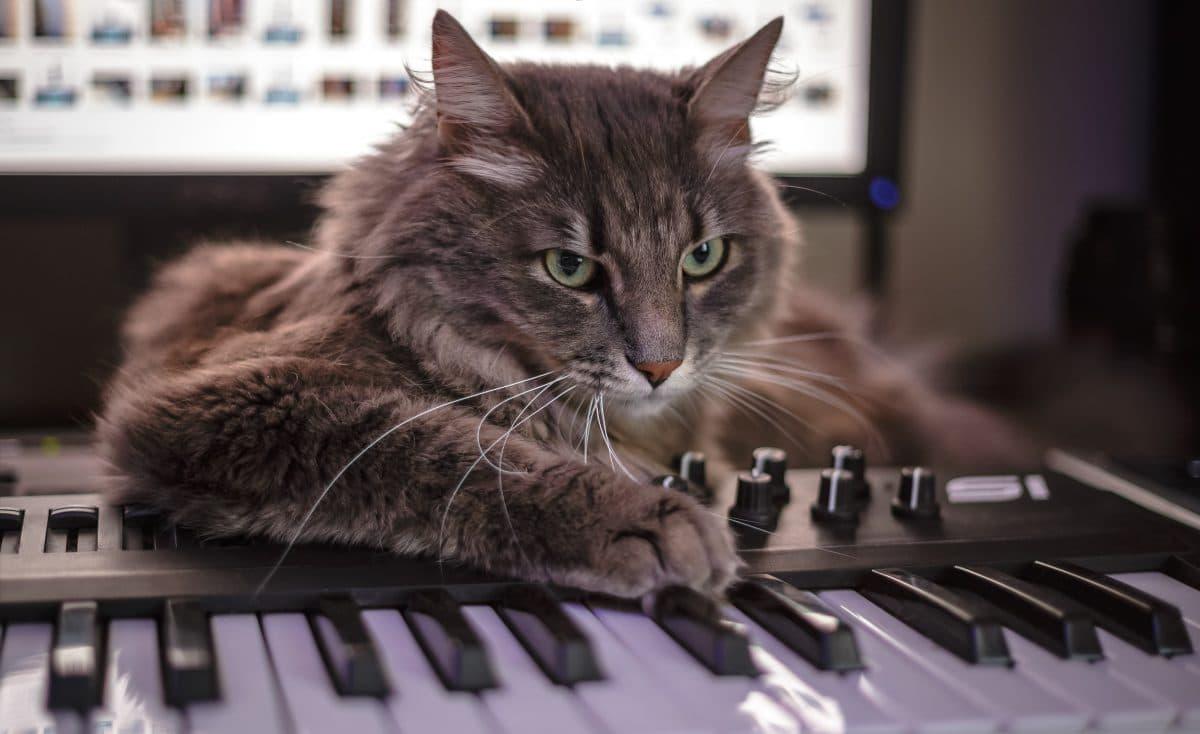 Katze hört so laut Musik, dass die Polizei anrücken muss