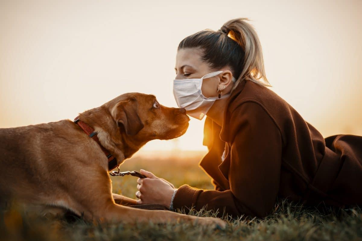 Corona-Spürhunde künftig als Eintritts-Tester?