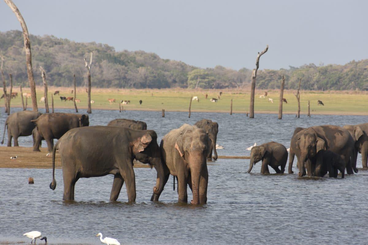 Sri Lanka verbietet Elefantenreiten unter Alkohol- und Drogeneinfluss