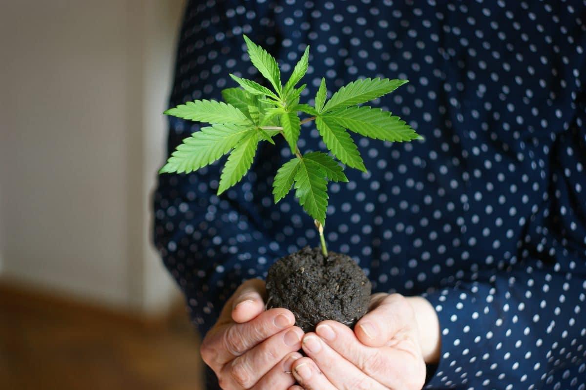 91-Jährige löst Polizeieinsatz aus, weil sie im Seniorenheim Marihuana anbaut
