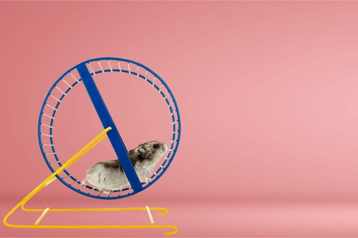 Dieser Hamster handelt erfolgreich mit Kryptowährungen
