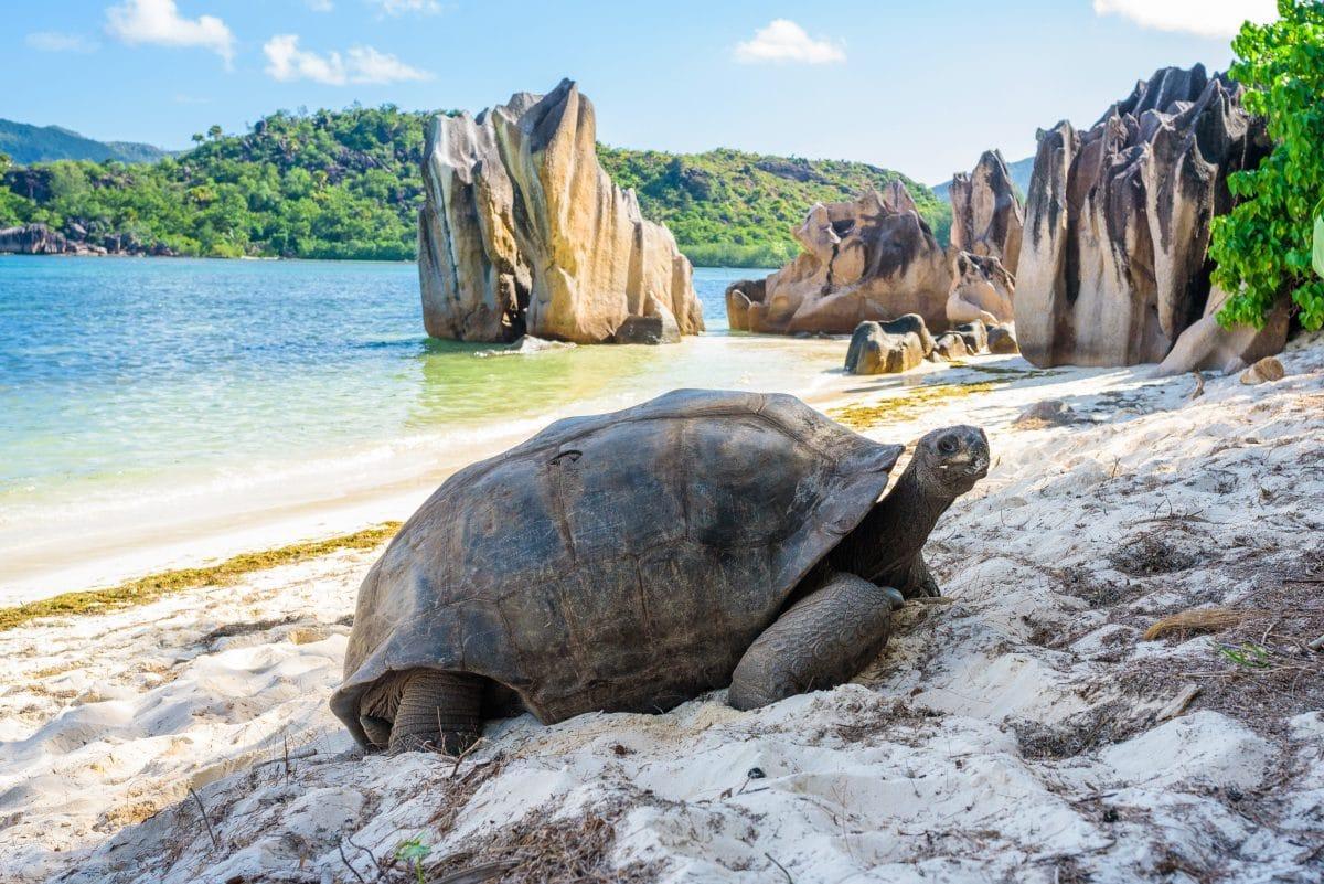 Liste der bedrohten Tierarten ist alarmierend lang