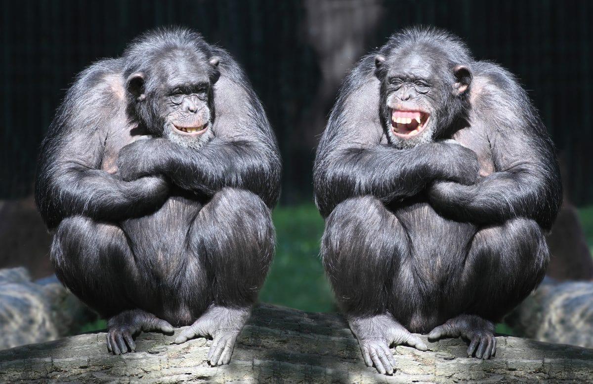 New Yorker Zoo: Gorillas haben heißen Oralsex vor Kindern